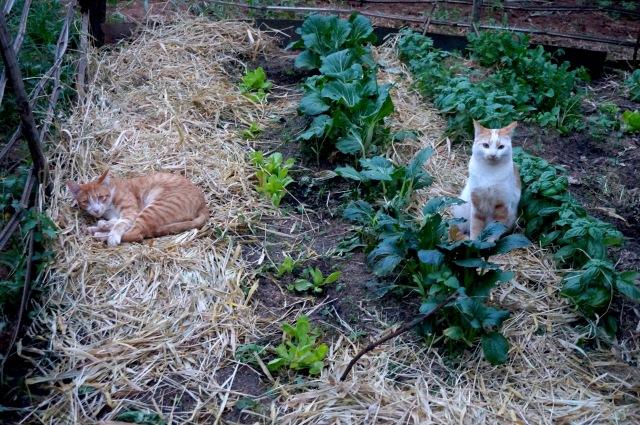 Kitties garden