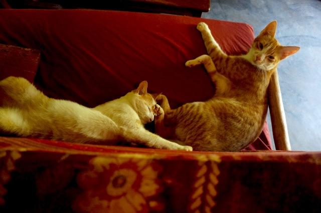 kittycouch2
