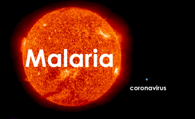 Malaria coronavirus